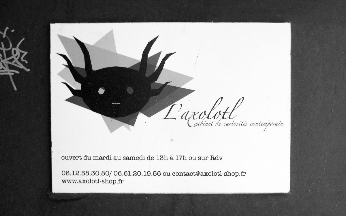 axolotl-toulon-7